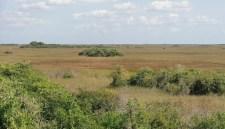 Everglade Landscape
