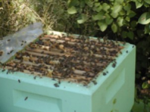 Commercial Bee Hive