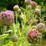 El Aroma de las Flores en Nuestro Plato