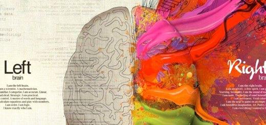 cervello-emisferi