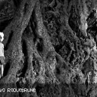 Costa Azzurra: a Roquebrune l'albero più vecchio di Francia