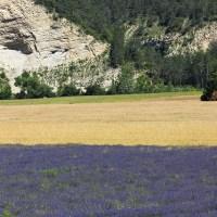 Lavanda: itinerari provenzali