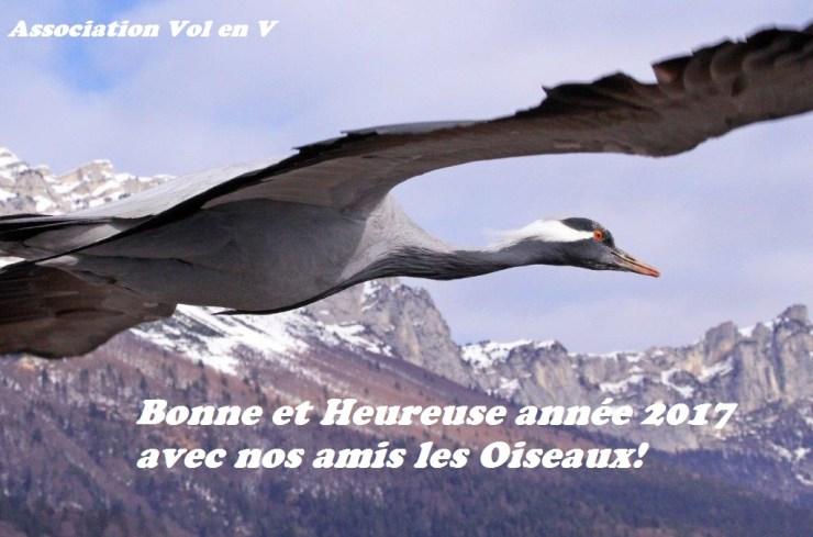Agir pour la protection des Oiseaux en Volant en ULM et Montgolfière avec les Oies, Bernaches et Grues
