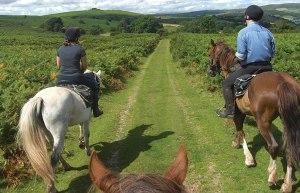Horse Riding 02