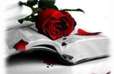 Un libro y una rosa. Feliz dia del libro