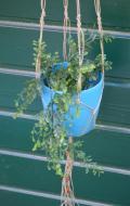 plantenhanger7