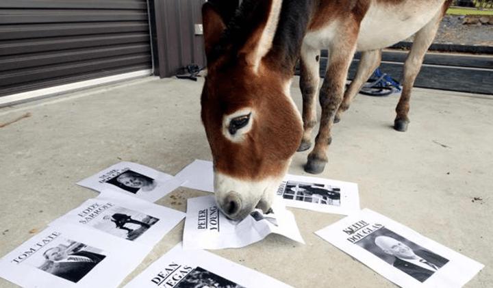 Donkey vote
