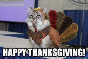 Turkey cat