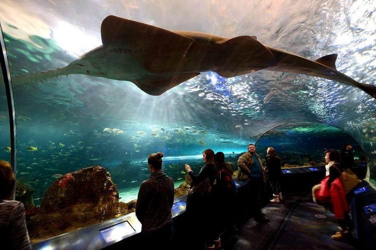 aquarium-toronto