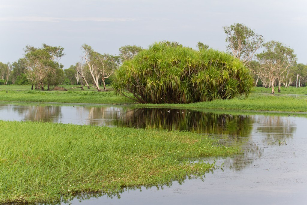 kakadu-yellow-river-2
