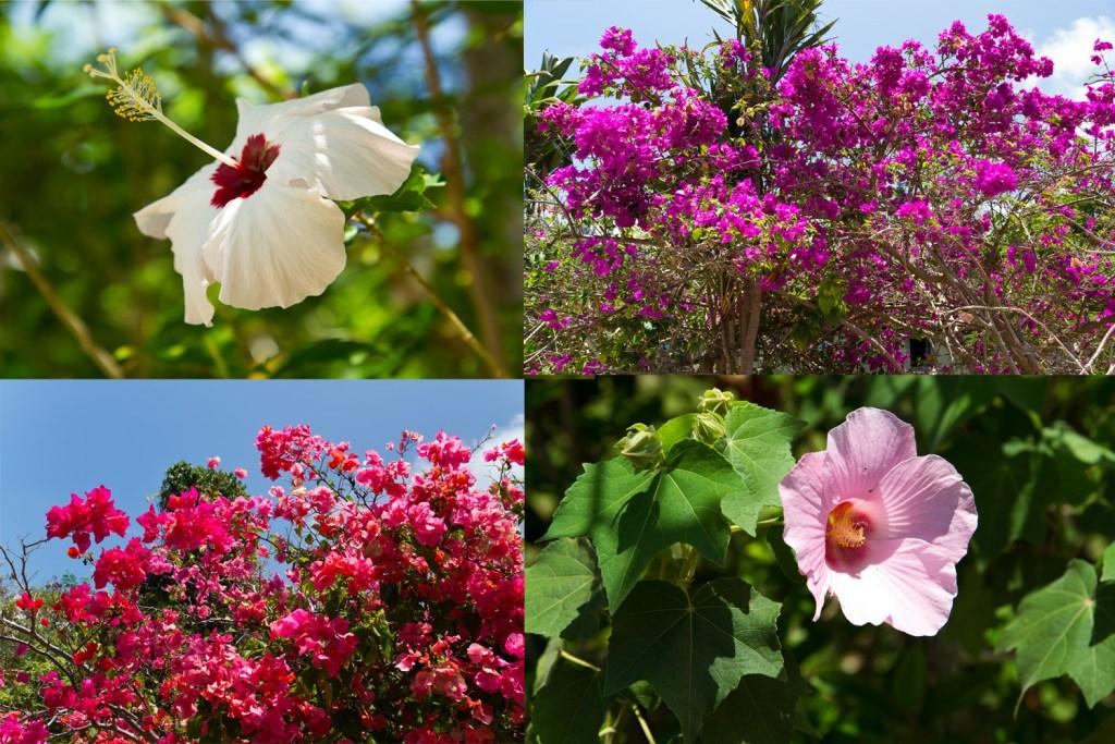 ile-des-pins-fleurs