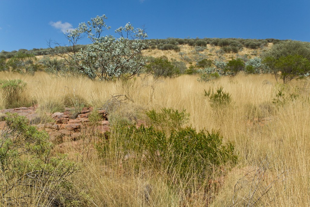 macdonnell-ranges-trephina-gorge-2