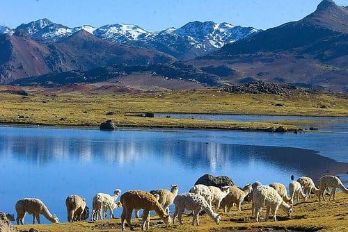 Las más de 23 mil especies de flora y fauna presentes en el territorio peruano, evidencian la gran biodiversidad que poseemos.