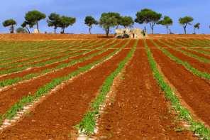 The countryside in Puglia