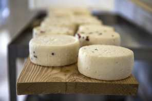 Pecorino cheese, traditional Tuscan Food
