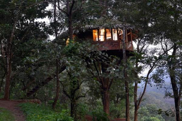 Rainforest-Boutique-Athirapally