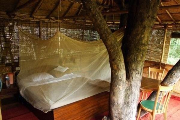 Safariland-Treehouse-Resort