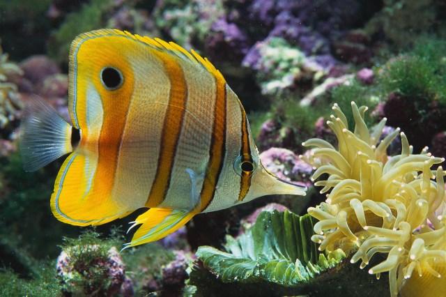 Salt Water Aquarium Wallpaper Free HD Backgrounds Images Pictures