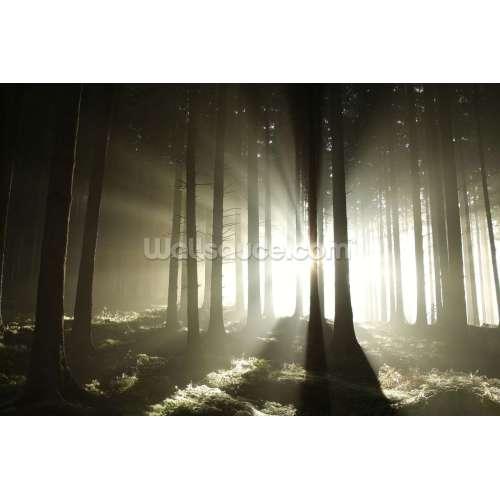 Medium Crop Of Dark Forest Wallpaper