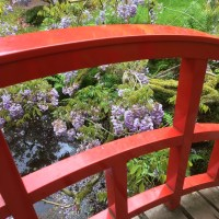 Japanse Tuin …Den Haag (Bucket List)