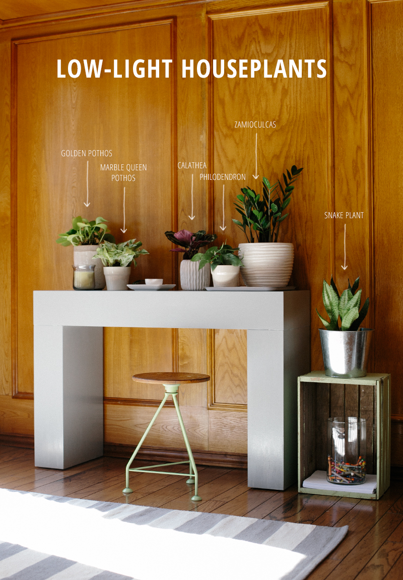Six fool-proof, low-light houseplants.