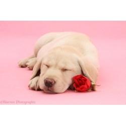 Small Crop Of Cute Puppies Sleeping