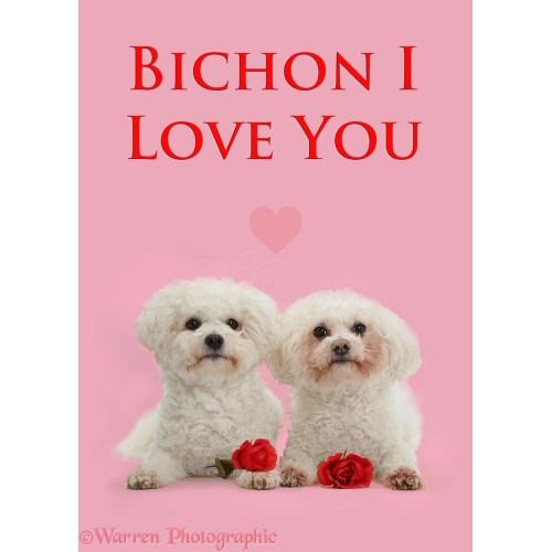 Medium Crop Of I Love You Dog