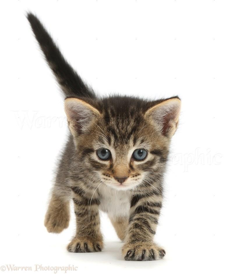 Large Of 5 Week Old Kitten