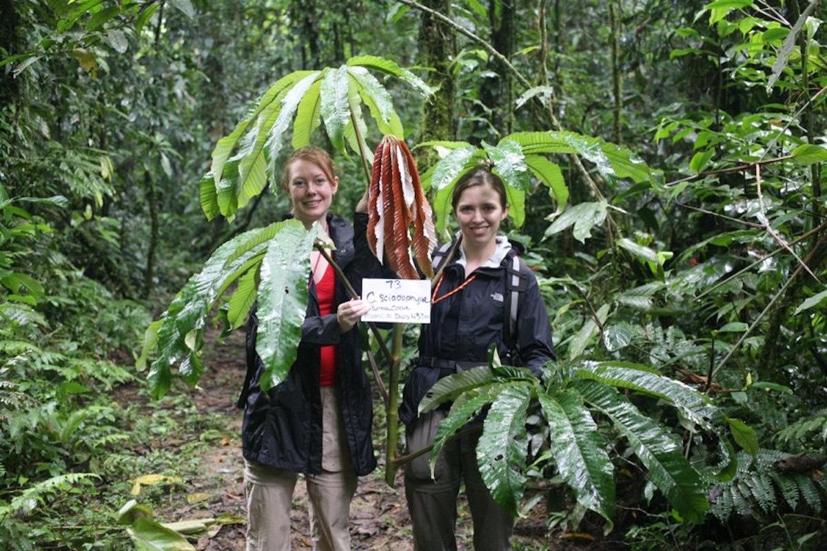 Feature: 3 Studenten und die Rohstoffe aus dem Regenwald