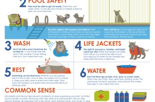 Dog Water Safety Infographic
