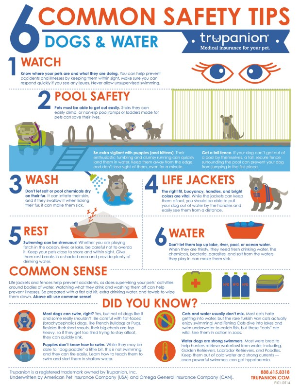 Six Common Safety Tips Dogs And Water Infographic