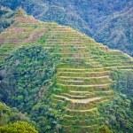 Banaue Rice Terraces / Photo by Gino Mempin