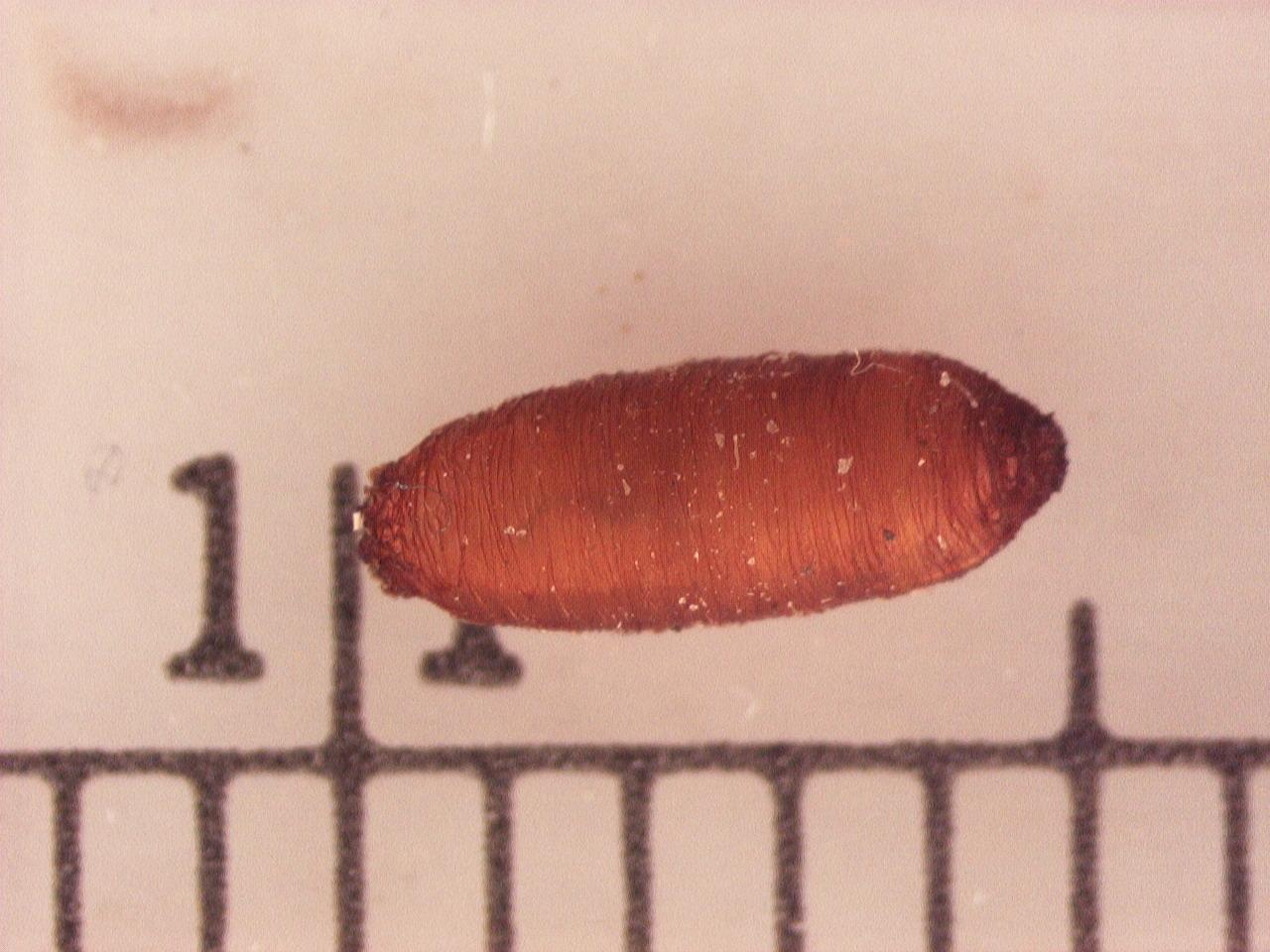 Fullsize Of Maggots In House
