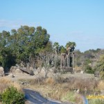 Wild-Africa-Trek-wdwradio-878