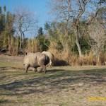 Wild-Africa-Trek-wdwradio-897
