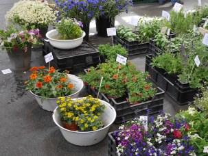 Bloemen markthallen neun berlijn