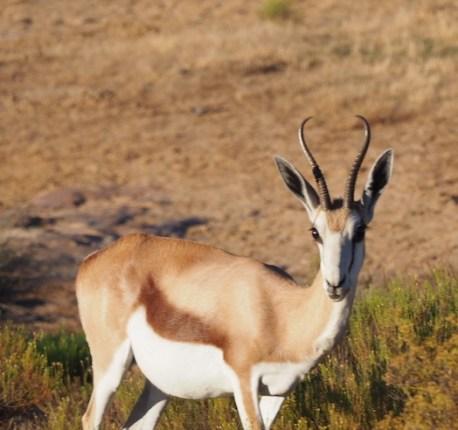 Bontebok bushmans kloof