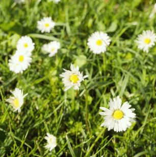 Zomerweer lente