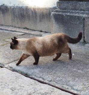 Kat in Valenca do Minho