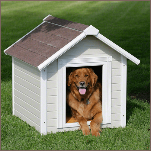 Standard Painted Dog House