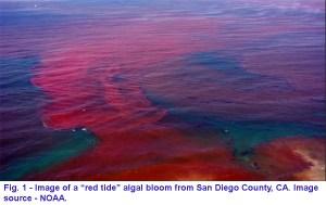 fig001-san-diego-area-algal-bloom-image