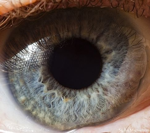 fotos-macro-ojos-suren-manvelyan-04