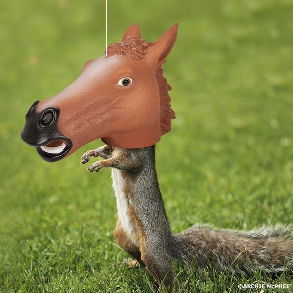mascara de caballo para ardillas
