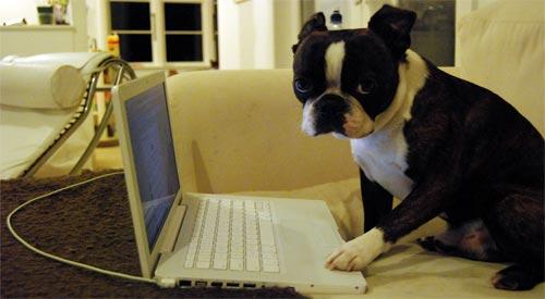 User Dog