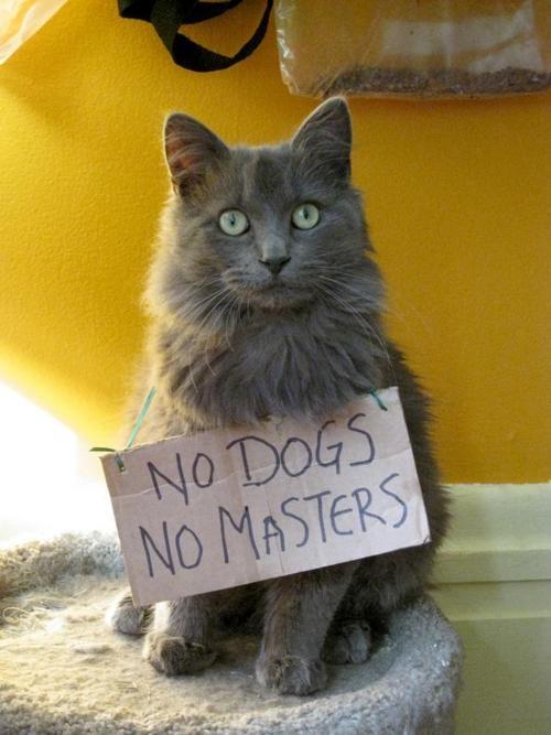 dogsmasters