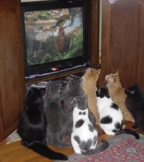 tvcats