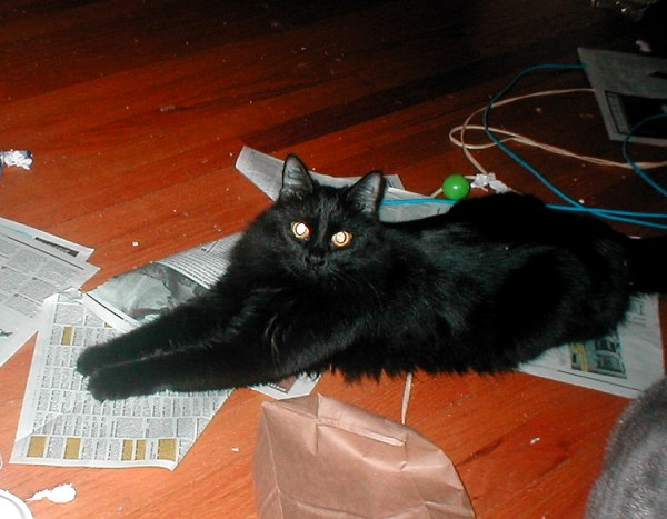 The floor doesn't always look like this; she's lying on papers that had recently been the site of a very boisterous catnip party.