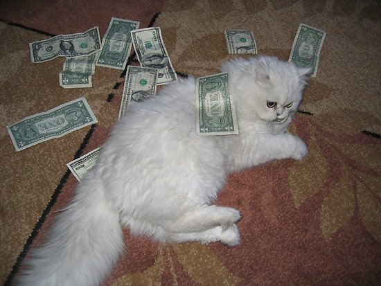 Pledge Drive: Fluffy Cat Rolling In Money Edition!