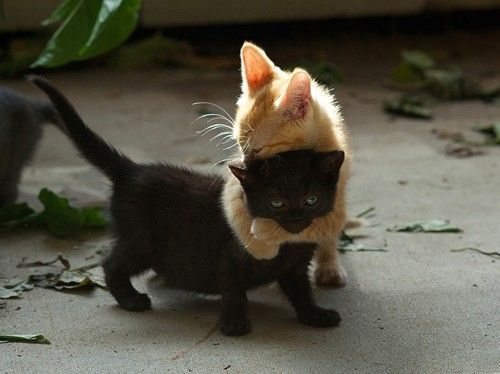 It's either a hug, or attempted murder. With cats, it's hard to tell.