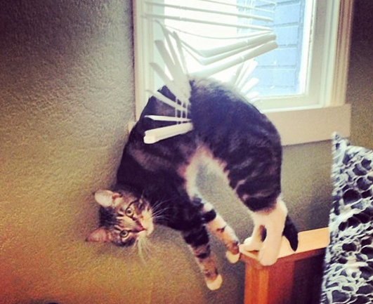 Open Thread for Personal Stuff: August 2014 Suspended Kitty Edition